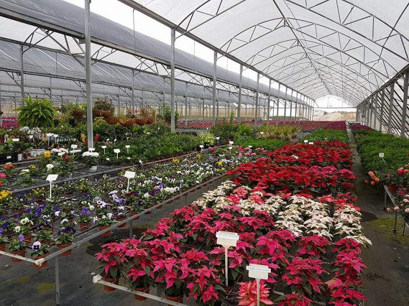 Ben-Ben Flower Nursery