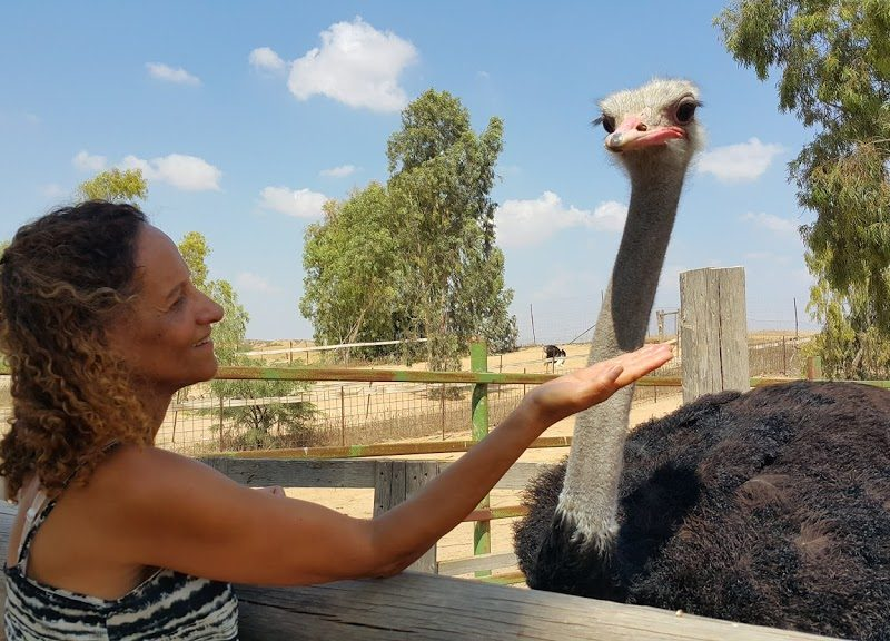 El HaYaen – The Ostrich Farm