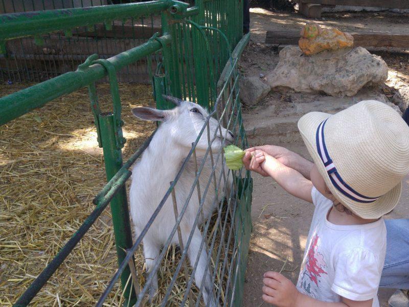 Petting Zoo in Gvaram