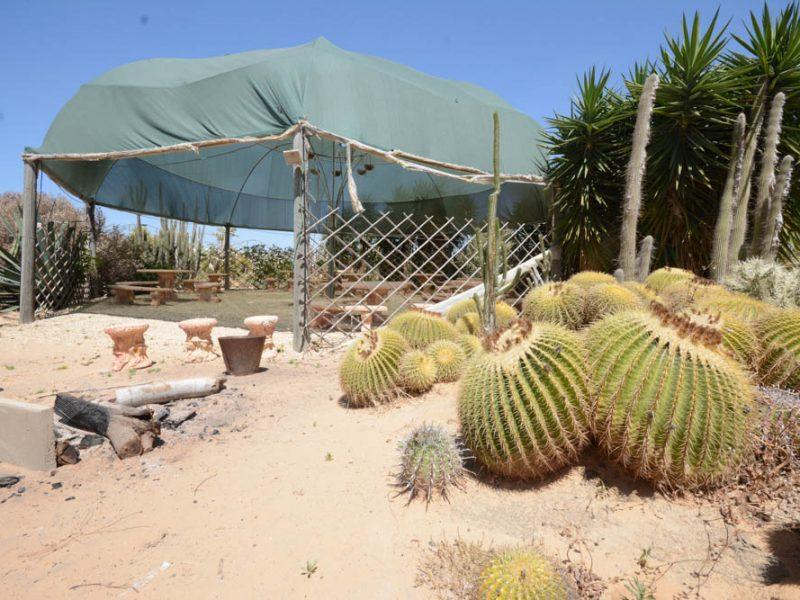 The Cactus Farm
