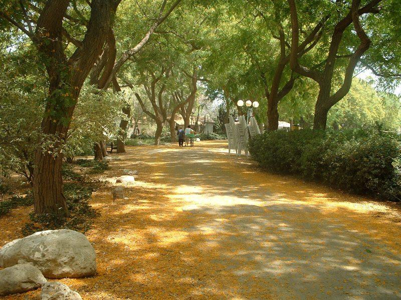 גן בוטני נקודה ירוקה