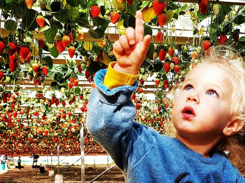 אורי תותים